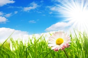 Flor con el sol de fondo