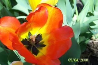 flor de naranja, flores