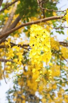 Flor de primavera de la naturaleza de la planta de la naturaleza