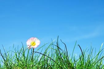 Flor entre la maleza