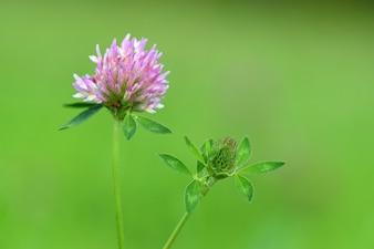 Flor morada de cerca
