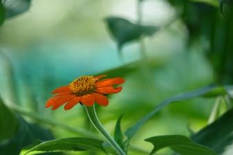 Flor naranja con el fondo borroso