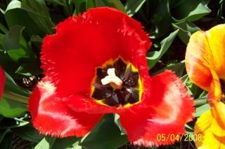 flor roja, fuera