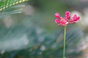 Flor rosa con un fondo borroso