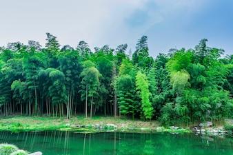 Flora, cultura, crecimiento, árbol, decoración
