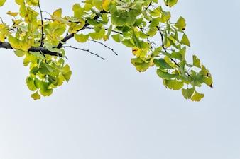 Flora de la muestra el árbol blanco crece