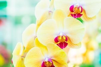 Floración flor flora primavera detalle