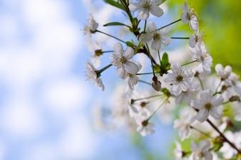 Florece rama de árbol con copyspace
