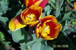 flores, pétalos