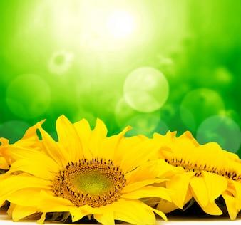 Flores amarillas con efecto bokeh