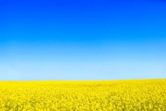 Flores amarillas con un cielo azul