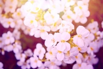Flores blancas con un filtro morado