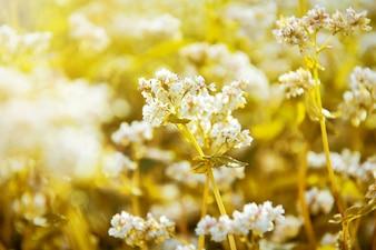 Flores blancas en el archivo en el verano.