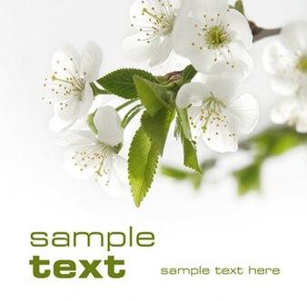Flores blanco Imágenes calidad de los materiales