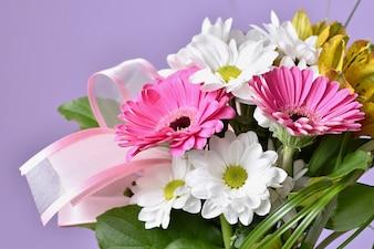 Flores coloridas hermosas de la margarita. Gerbera. Primavera de fondo - jardín.