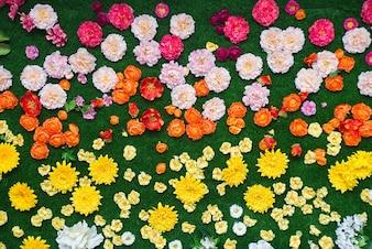 Flores coloridas y césped verde