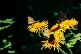 Flores con los pétalos amarillos