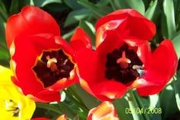 flores de color rojo, caliente