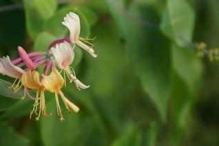 Flores de múltiples colores