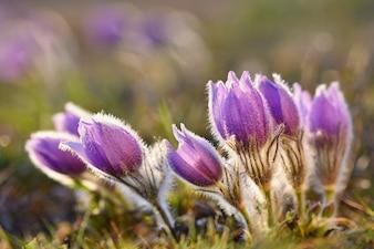 Flores delicadas en un día de viento