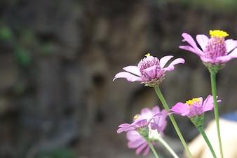Flores lilas con el fondo desenfocado