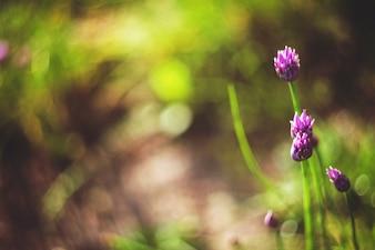 Flores moradas con el fondo borroso