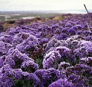 flores púrpura película