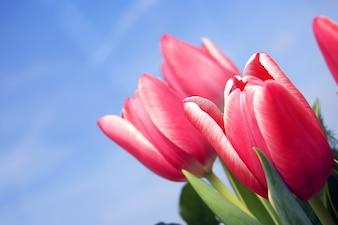 Flores rojas con el cielo de fondo