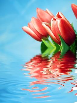Flores rojas reflejadas en agua