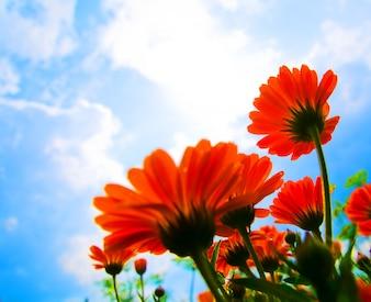Flores rojas y nubes