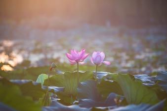 Flores rosa y morada