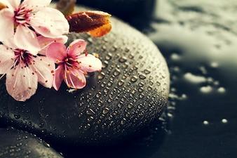 Flores rosadas hermosas del balneario en el balneario Piedras calientes en el fondo mojado del agua. Composición Lateral. Espacio De La Copia. Concepto Del Balneario. Fondo Oscuro.