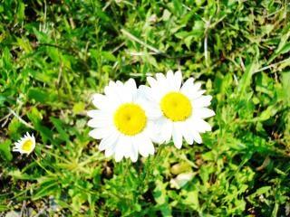 flores silvestres, amarillas