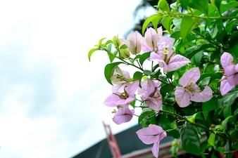 Flores silvestres violeta claro