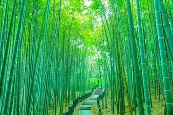 Follaje palo tropical hierba verde