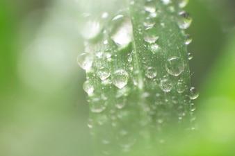 Fondo borroso con hoja verde y gotas de lluvia