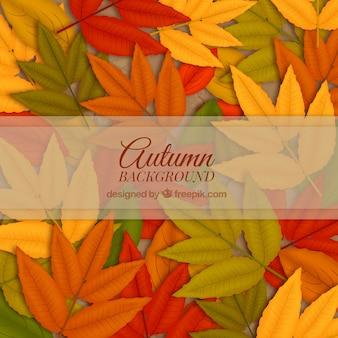 Fondo con hojas de otoño