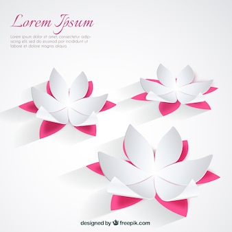 Fondo de flores de loto blancas