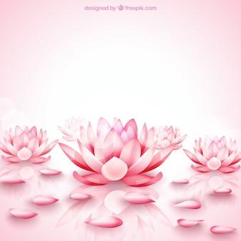 Fondo de flores de loto rosas