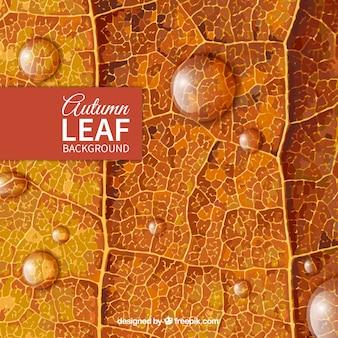 Fondo de hoja de otoño
