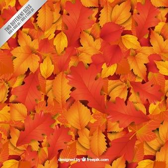 Fondo de hojas otoñales