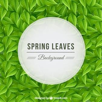Fondo de hojas primaverales