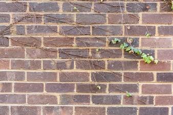 Fondo de pared de ladrillo marrón