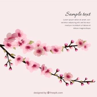 Fondo de primavera con los cerezos en flor