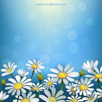 Fondo primaveral con margaritas