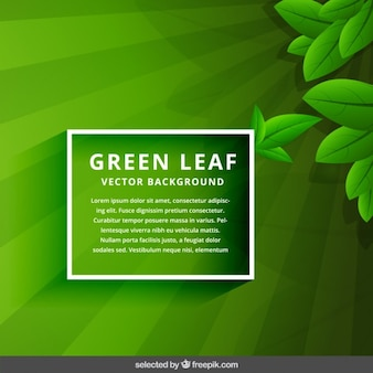Fondo verde hoja