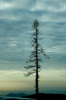 Foto vertical de un árbol