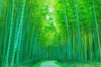 Frescura natural lluvia mañana japón