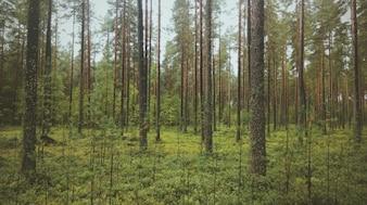 Frondoso bosque verde