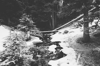 Corriente congelada en el bosque